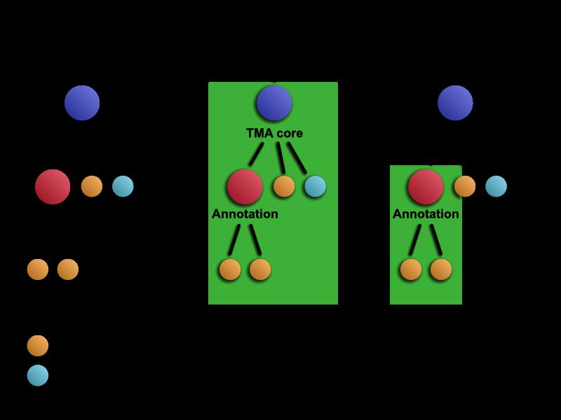 Conceptual hierarchy